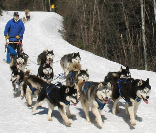 Sled Dogs Race
