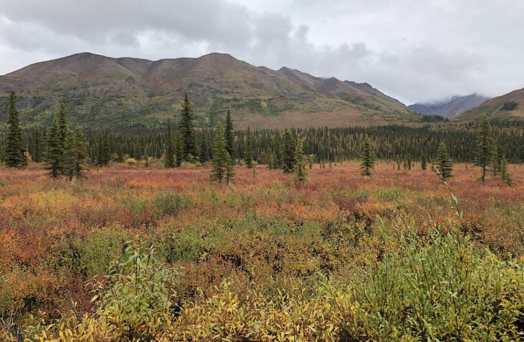 Wrangell-Fall-Colors