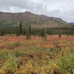 Wrangell Fall Colors