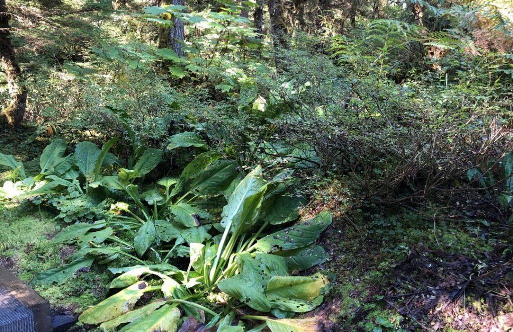 Wrangell-Vegetation