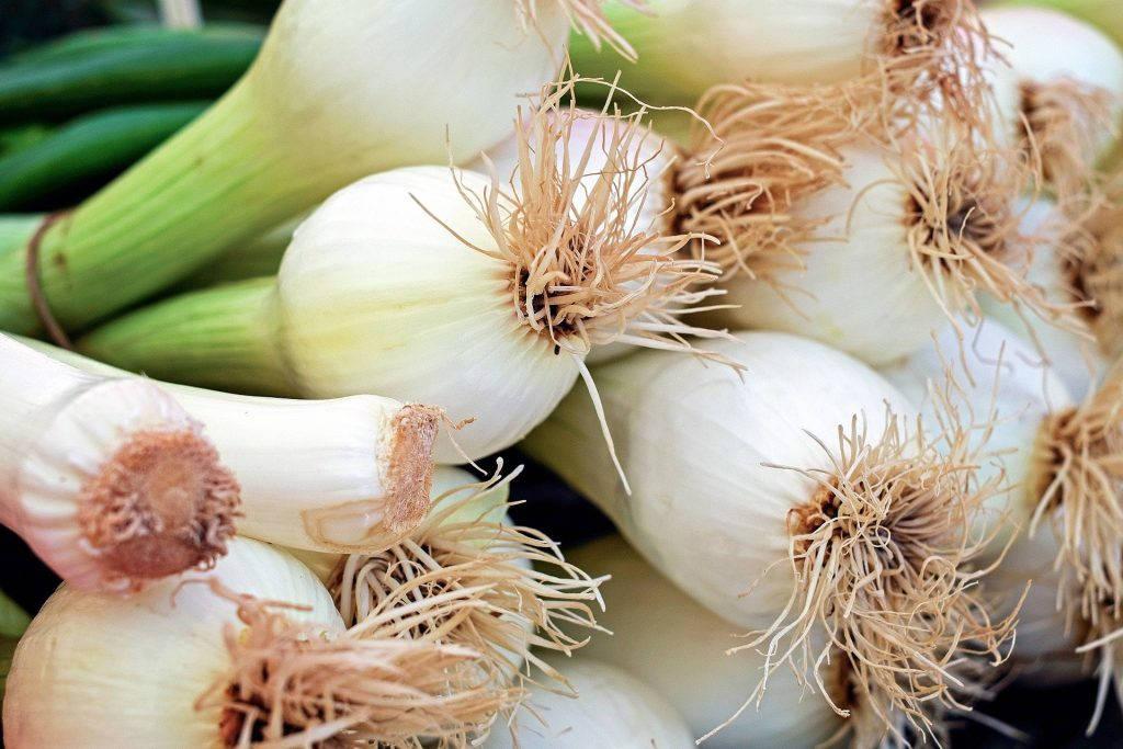 spring-onion
