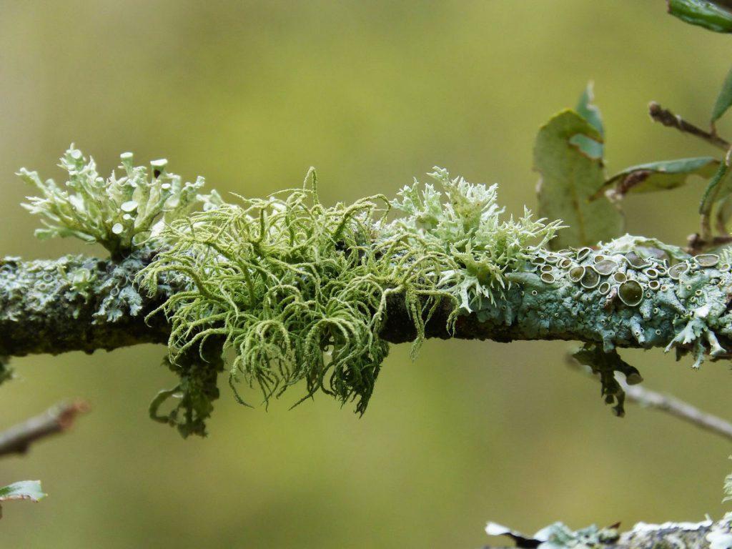 vegetation-overview-3